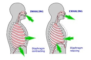 diaphragmatic_breathing